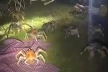 一家庭烧烤时爬来50多只大螃蟹 网友调侃:吓得口水直流
